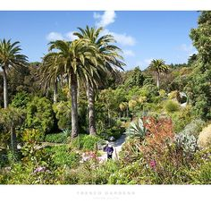 Tresco Gardens, Isles of Scilly . of the tip of Cornwall, England is this tropical paradise Scilly Island, Cornwall England, Gardening, Tropical Paradise, Heaven On Earth, British Isles, Holiday Destinations, Beautiful Gardens, Countryside