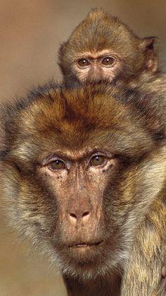 monkeys, cub, baby, family, caring