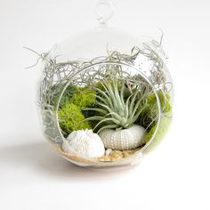 Beach Terrarium // DIY with Air Plant // Ombre. $24.00, via Etsy.