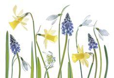 Фотограф-флорист Mandy Disher и ее прекрасные цветы - Ярмарка Мастеров - ручная работа, handmade