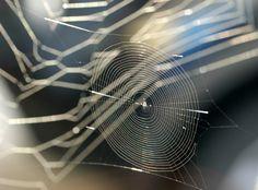 Web in Web