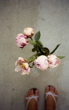 peonies, via Flickr