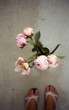 peonies, via Flickr