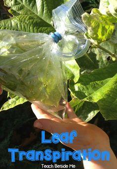 Leaf Transpiration E