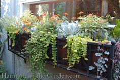 My husband made a beautiful wrought iron window box for me years ago.  I can't wait to replant it with succulents and the like!