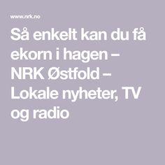 Så enkelt kan du få ekorn i hagen – NRK Østfold – Lokale nyheter, TV og radio Tv, Television Set, Television, Tvs