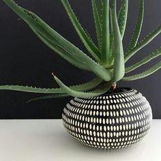 Black and white planter pot design White Vases, White Planters, Black Vase, Exotic Plants, Aloe Vera Plant Indoor, Indoor Flower Pots, Indoor Plants, Indoor Garden, Ceramic Flower Pots
