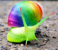 Snail Psychedelic Snail so pretty and bright!Psychedelic Snail so pretty and bright! Animals And Pets, Baby Animals, Cute Animals, Smiling Animals, Taste The Rainbow, Over The Rainbow, Rainbow Art, Rainbow Colors, Beautiful Creatures