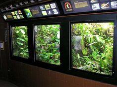 Build A Terrarium, Gecko Terrarium, Aquarium Terrarium, Glass Terrarium, Reptile Zoo, Reptile Habitat, Reptile House, Reptile Tanks, Paludarium