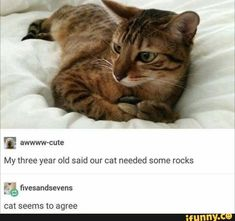 #lol, #10at10, #AlternateFeatures, #ifunncleanup, #Feature #catsfunnytumblr