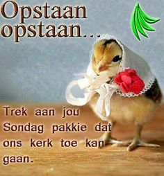 Sondag Goeie More, Morning Wish, Afrikaans, Quote Of The Day, Words, Quotes, Animals, Gelee, Phrase Of The Day