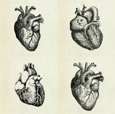 Anatomical heart illustrations
