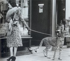 Phyllis Gordon with pet Cheetah | Honest information about pet cheetah care, misconceptions and interesting facts about them.