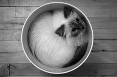 """A cat will assume the shape of its container."" --Anonymous"