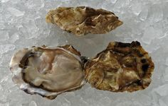 Nisqually Sweet Oyster Raw Oysters, Oyster Recipes, Artichoke, Pacific Northwest, Caviar, Seafood, Champagne, Stuffed Mushrooms, Vegetables