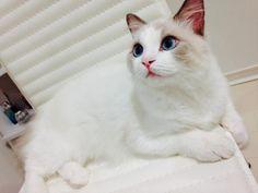 """cat-pic: """" 今日で生後半年ですよろしくです。 """""""