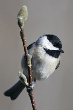 Check out photos and results from the 2012 Great Backyard Bird Count!