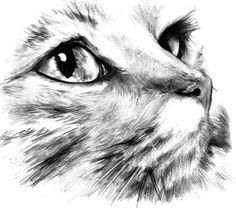 Dibujos de gatos: dibujo a lápiz de un gato soñador | Gatosblog