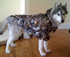 Pirates Carrying a Treasure Chest Costume | Costumes, Dog ...