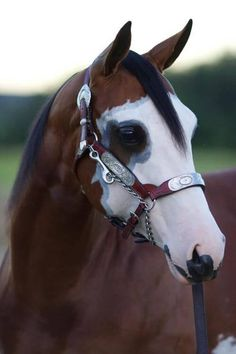 Horse with incredible face markings | 16 Horses Too Beautiful to Believe