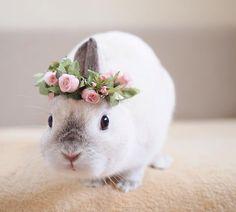 fleur lapin