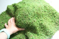 You've gotta see what she did with this moss! It's darling!