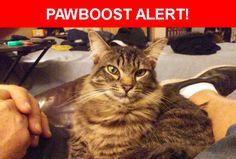 Please spread the word! Bubsi was last seen in Santa Fe Springs, CA 90670.    Nearest Address: Near Ringwood Ave & Lakeland Rd