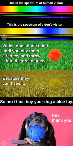 Be sure to buy blue toys for your dog