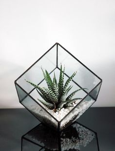 Square Terrarium — WhiteLiesJewelry — Featured on I Luv Etsy! | pinterest…