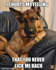 The German Shepherd Funny Animal Memes, Cute Funny Animals, Funny Animal Pictures, German Shepherd Memes, German Shepherd Pictures, German Shepherds, It Hurts Me, In My Feelings, Pets