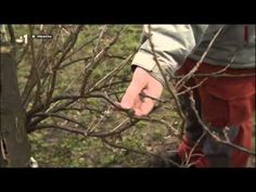 Ríbezle rez jarný - YouTube Winter Garden, Outdoor Blanket, Home And Garden, Garden Ideas, Gardening, Conservatory, Garten, Landscaping Ideas, Backyard Ideas