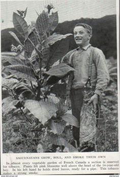 Saguenayans Grow, Roll And Smoke Their Own /Druck, Entnommen Aus Zeitschrift/1939 - Bücher, Zeitschriften, Comics