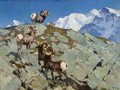Carl Rungius (1869-1959) Alarmed (Big Horn Rocky Mountain Sheep), 30x40