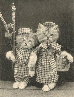 Vintage Dressed Cat Couple