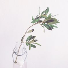 #Olive #Tree #travel #Souvenir #diy #deko #interior #nature  www.follow-your-trolley.com Olives, Wreaths, Nature, Plants, Design, Travel In Style, Deco, Nice Asses, Naturaleza