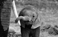 be kind to elephants ❤️