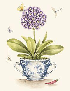 Watercolor Sketch, Watercolor Illustration, Floral Watercolor, Watercolor Paintings, Botanical Drawings, Botanical Illustration, Botanical Prints, Abstract Flower Art, Plant Painting