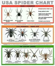.Can a spider bite g