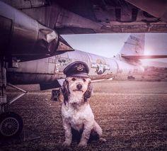 Un fotógrafo hace fotos adorables a los perros de un refugio para intentar que sean adoptados