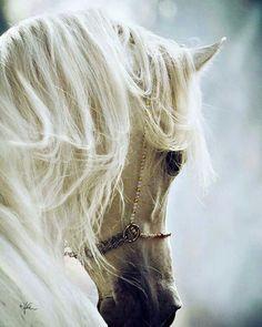 Arabian Elegance.. Unsurpassed