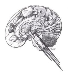 Not my brain but I appreciate it and wish it was!  Brain (right)  This is your brain on art!