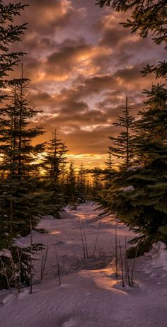 Trendy Pine Tree Forest Photography Earth 46 Ideas - Welcome to our website, We hope you are satisfied with the content we offer. Forest Photography, Background For Photography, Landscape Photography, Phone Photography, Photography Backgrounds, Sunset Photography, Life Photography, Winter Scenery, Winter Trees