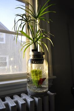 Aquaponic Mason Jar - Click here for more photos