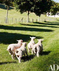 A Gothic Revival House in the English Countryside Photos Dorset Sheep, Farm Animals, Cute Animals, Baby Beagle, Farmhouse Garden, English Farmhouse, English Countryside, Country Life, French Country