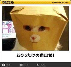 【爆笑】こんなの絶対に笑ってしまう!ネコ画像でボケてが面白すぎる(68枚)