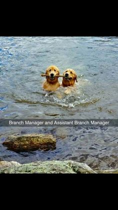 It's assistant to the branch manager lol #officereferences