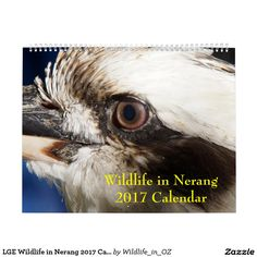 LGE Wildlife in Nerang 2017 Calendar - Click on photo to view item then click on item to see how to purchase that item. #wildlife #koalabear #calendar #zazzle