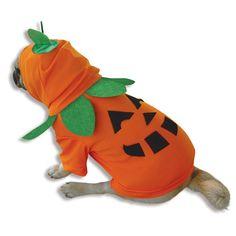 Pumpkin Pooch Dog Costume