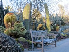 The Huntington Desert Garden is one of the largest and oldest assemblages of cacti and other succulents in the world.....