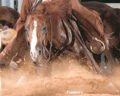 Dual Smart Ray - Cutting horse Cutting!western quarter paint horse appaloosa equine tack cowboy cowgirl rodeo ranch show ponypleasure barrel racing pole bending saddle bronc gymkhana